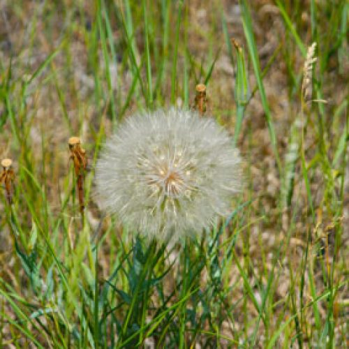 dandelion Mom blogs
